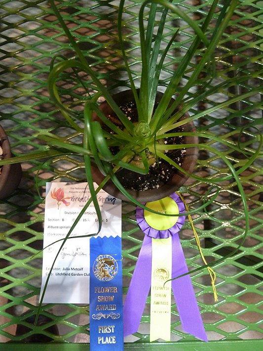 Horticulture Award Winners Federated Garden Clubs Of Ct